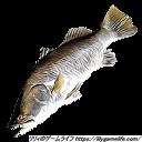 Patron 魚